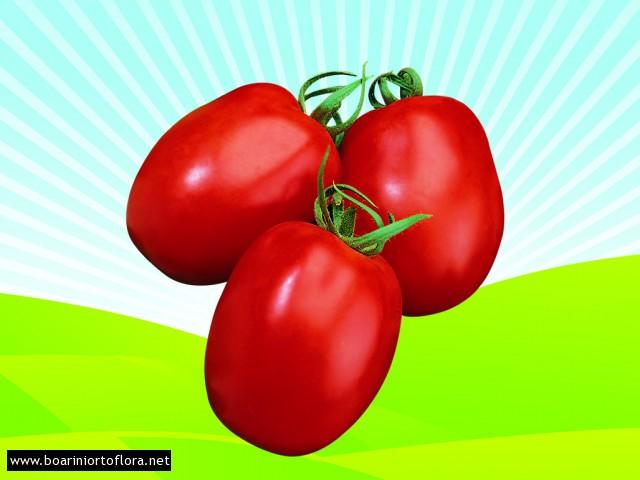 Pomodoro da conserva tondo ortoflora boarini for Cetriolo tondo